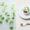 ミニチュアレタス(サラダ)の作り方